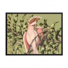 BIRDIE GREEN - STAMPA CON CORNICE
